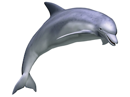 [Obrazek: delfin.jpg]